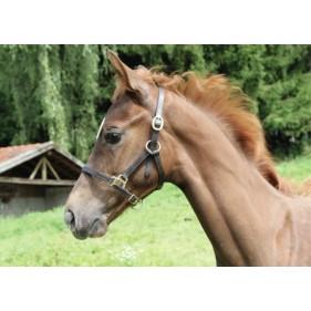 Leer Halter Foal